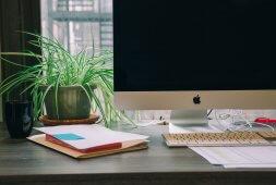 de-beste-planten-voor-op-het-kantoor-of-je-thuiswerkplek